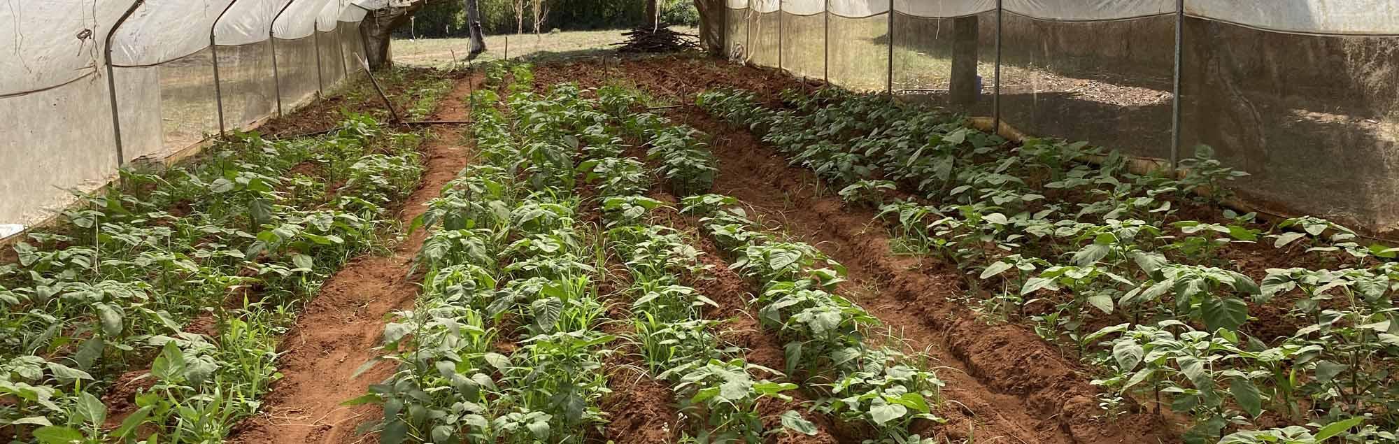 Barnelandsbyen i Kenya er åpnet